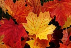 holiday_thanksgiving_canada