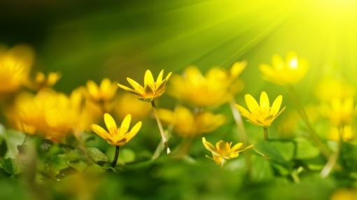 yellow-flowers-sunshine