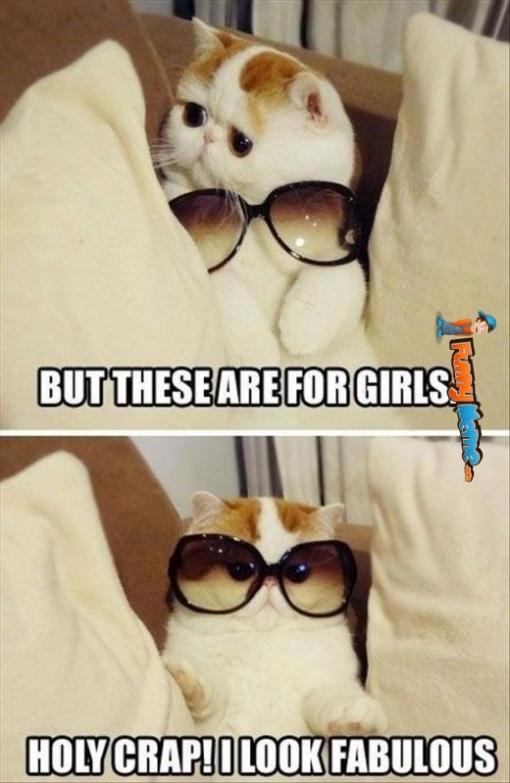 i look fabulous cat