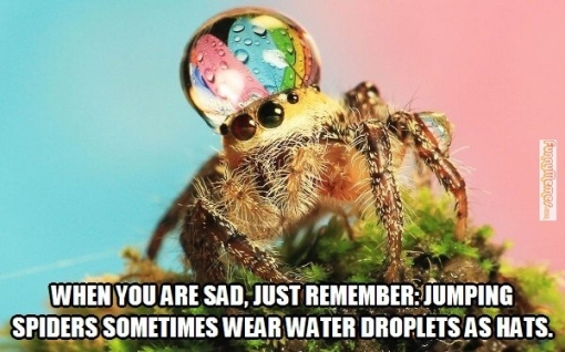 spiders-wear-water-droplets-as-hats